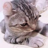 cat_paw
