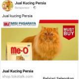 jual_beli_kucing_persia