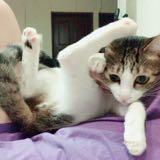 cat_91