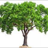 naturaltree