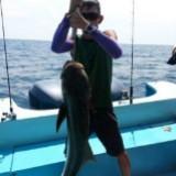 bait_fish609