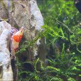 shrimptanker