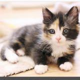 kittyxluvv