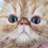 catsss.com
