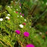 hari_flora