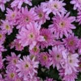 spring_flower_