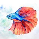 lukethefish