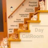 daycatroom.1